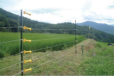 yasei_electric_fence_dear02