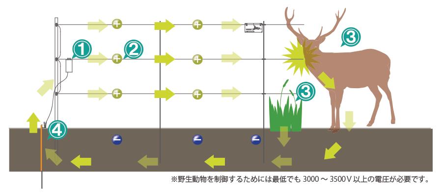 shock_image03